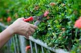 Durchführung von Gartenarbeiten