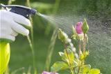 Gartenpflege und Unkrautbeseitigung