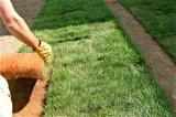 Rasen anlegen, Rollrasen verlegen