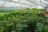 Begleitservice in Gartencenter und Baumärkte